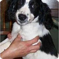 Adopt A Pet :: Soccer - Sugarland, TX