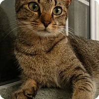 Adopt A Pet :: Queenie II - Florence, KY