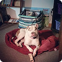 Adopt A Pet :: Zoey - Acushnet, MA
