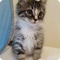 Adopt A Pet :: Kolbold - North Highlands, CA