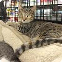 Adopt A Pet :: Taylor - Bear, DE