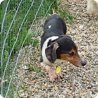 Adopt A Pet :: Durango - Prole, IA