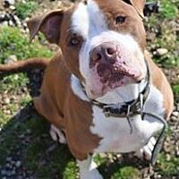 Adopt A Pet :: Hootch - Ozone Park, NY