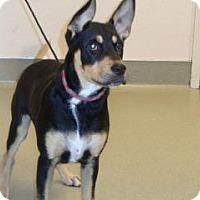 Adopt A Pet :: Ryder - Wildomar, CA