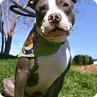 Adopt A Pet :: April - Durham, NC
