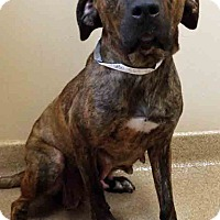 Adopt A Pet :: ADOPTED!!!   Missy - Oswego, IL