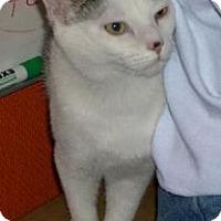 Adopt A Pet :: Elliot - Alamo, CA