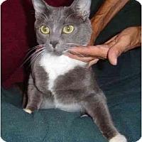Adopt A Pet :: Lily - Modesto, CA