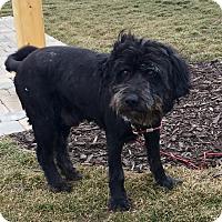 Adopt A Pet :: Marley - Toledo, OH