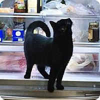 Adopt A Pet :: Mama Saween - Mission Viejo, CA