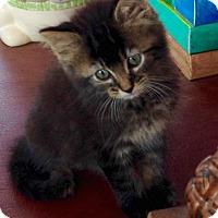 Adopt A Pet :: Hardy - Speonk, NY