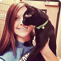 Adopt A Pet :: Sookie Smokey black - McDonough, GA
