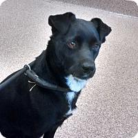 Adopt A Pet :: Lacey - Williston, FL