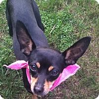 Adopt A Pet :: Perla - Oceanside, CA