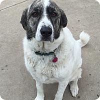 Adopt A Pet :: Stella - Bloomington, IL