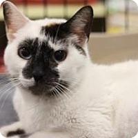 Adopt A Pet :: Elissa - Sacramento, CA
