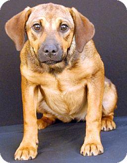 Shepherd (Unknown Type)/Hound (Unknown Type) Mix Dog for adoption in Newland, North Carolina - Emma Bloom