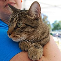 Adopt A Pet :: BHINDI - Pena Blanca, NM