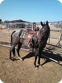 Quarterhorse Mix for adoption in Sac, California - Po