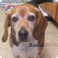 Adopt A Pet :: Rascal - Warren, PA