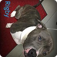 Adopt A Pet :: Rigby - Muskegon, MI