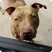 Adopt A Pet :: Autumn - Liberty Center, OH