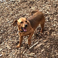 Adopt A Pet :: Eva - Acworth, GA
