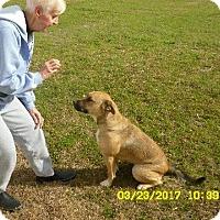 Adopt A Pet :: Lacey 8 moth gentle loving girl - Rowayton, CT