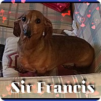 Adopt A Pet :: Sir Francis - Green Cove Springs, FL