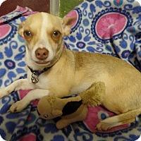 Adopt A Pet :: Chloe - Westfield, NY