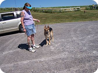 German Shepherd Dog Dog for adoption in Tully, New York - MAX