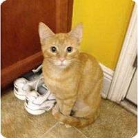 Adopt A Pet :: Goldie - Mobile, AL