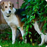 Adopt A Pet :: Leanne - Hastings, NY