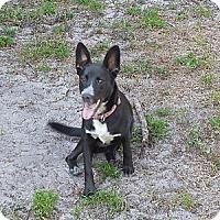 Adopt A Pet :: Stan - Ormond Beach, FL