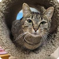 Adopt A Pet :: Melanie - Byron Center, MI