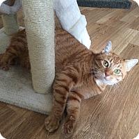 Adopt A Pet :: Bruce - Speonk, NY