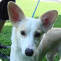 Adopt A Pet :: Cookie - Erwin, TN