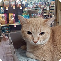 Adopt A Pet :: Buster - West Dundee, IL