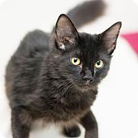 Adopt A Pet :: Lil Paw - Fountain Hills, AZ