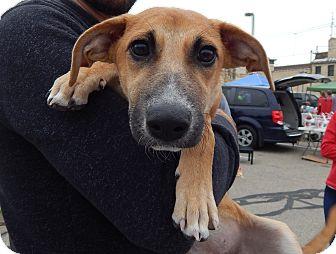 Black Mouth Cur/Plott Hound Mix Puppy for adoption in Fort Atkinson, Wisconsin - Maddie