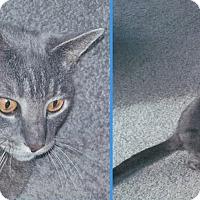Adopt A Pet :: Jesse and Wyatt - Colmar, PA