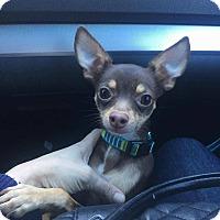 Adopt A Pet :: Reese - Bergen County, NJ