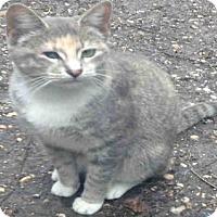 Adopt A Pet :: A423806 - San Antonio, TX