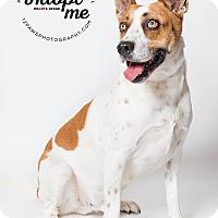 Adopt A Pet :: Odie - Apache Junction, AZ