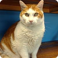 Adopt A Pet :: Bella - Brookings, SD