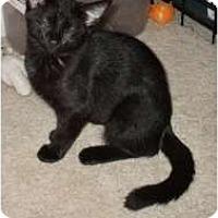 Adopt A Pet :: Bella - Henderson, KY