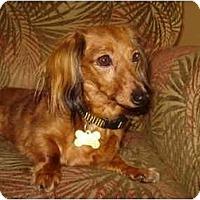 Adopt A Pet :: Molly - San Jose, CA
