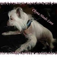 Adopt A Pet :: Chyna - Longmont, CO