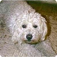 Adopt A Pet :: PIPPIN - dewey, AZ