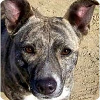 Adopt A Pet :: GHOST(WOW!!-GORGEOUS!!) - Hendersonville, TN